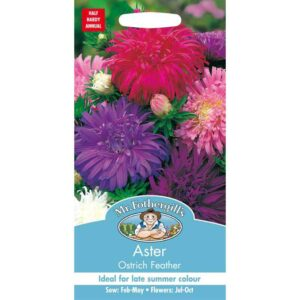 Mr Fothergill's Aster Ostrich Feather Seeds
