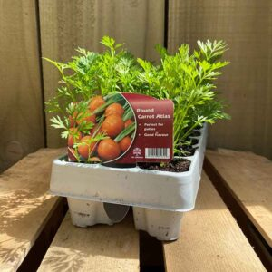 12 pack of Round Carrot Atlas