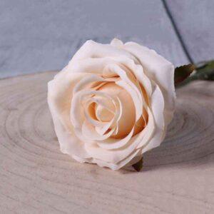 Small cream camelot rose