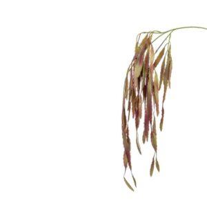 Burgundy Rhipsalis Spray Stem (80cm)