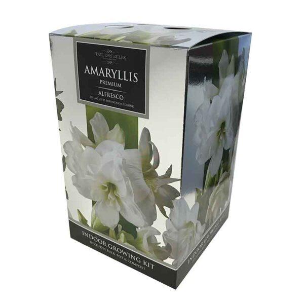 Amaryllis Premium 'Alfresco' (Hippeastrum) Indoor Growing Kit
