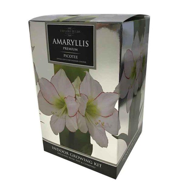 Amaryllis Premium 'Picotee' (Hippeastrum) Indoor Growing Kit