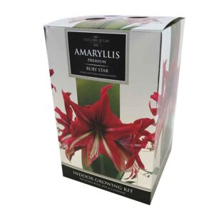 Amaryllis Premium 'Ruby Star' (Hippeastrum) Indoor Growing Kit