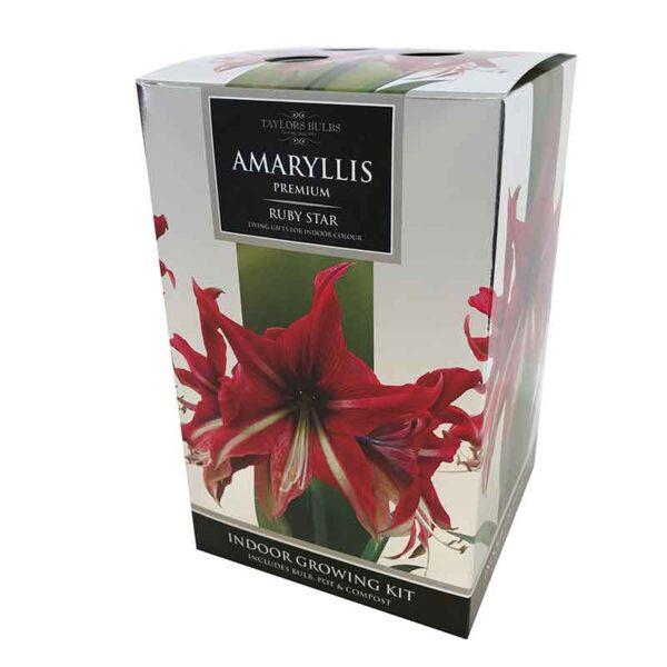 Amaryllis Premium 'Ruby Star' (Hippeastrum) Indoor Growing Kit