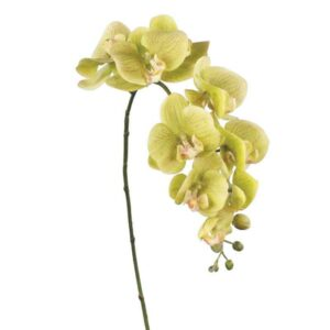 Floralsilk Fresh Touch Green Phalaenopsis Stem (86cm)