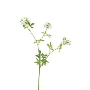Floralsilk Queen Annes Lace Spray Stem (100cm)