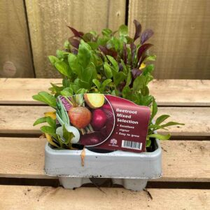Beetroot Mixed Selection 12 Pack