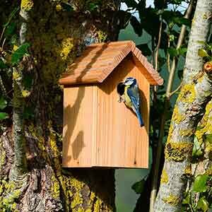 Bird Houses & Nest Boxes