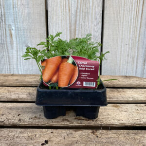 Carrot Plant Chantenay Red Cross 12 Pack
