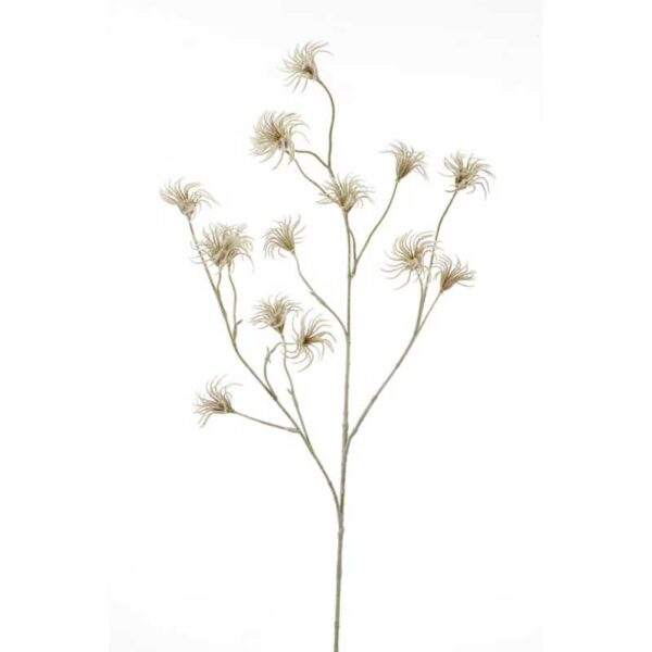 Green Clematis Seed Spray (105cm)