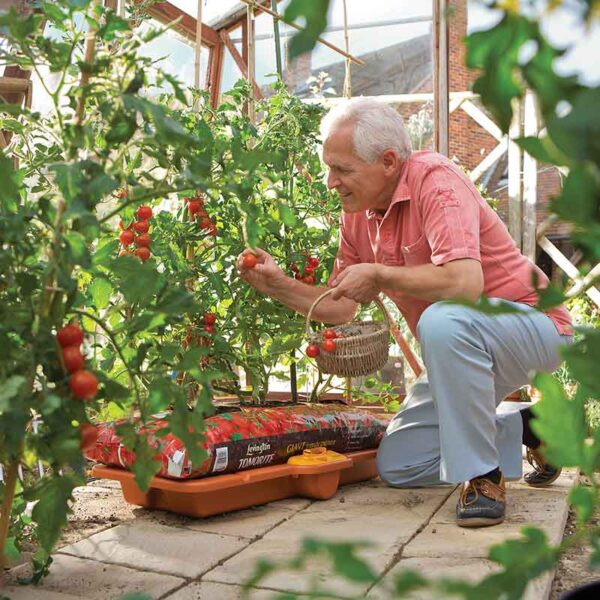 Grow healthy vibrant tomatoes with the Hozelock Growbag Waterer