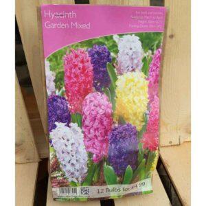Hyacinth Garden Mixed (12 Bulbs)