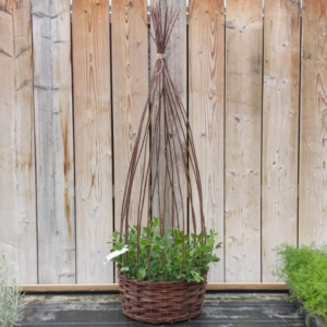 "18"" Filled Sweet Pea Planter (45.7cm)"