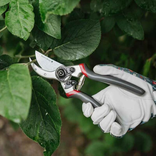 Kent & Stowe Professional Bypass Secateurs in use