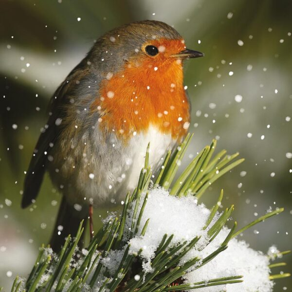 Ling Design Christmas Robins Pack of 12 3