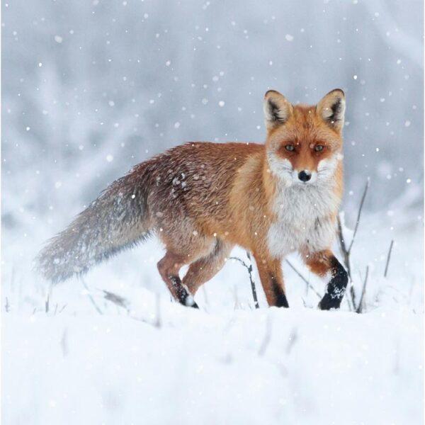 Ling Design Photographic Wildlife 3