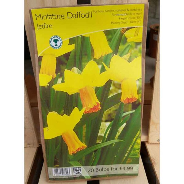Miniature Daffodil 'Jetfire' (20 Bulbs)