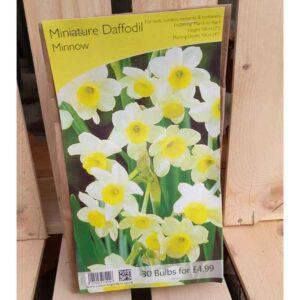 Miniature Daffodil 'Minnow' (30 Bulbs)