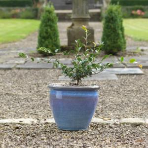 Naylor Clough Mill Mist Conservatory Pot (Medium)