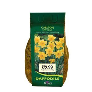 Narcissus 'Carlton' Daffodils (2kg Bag)
