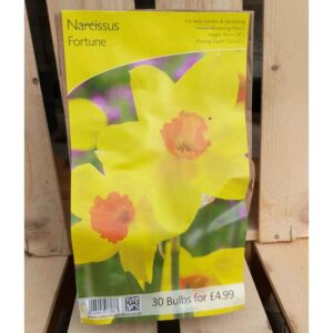 Narcissus 'Fortune' (30 Bulbs)