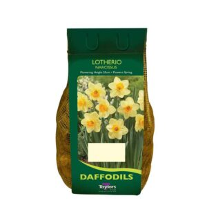 Narcissus 'Lotherio' Daffodils