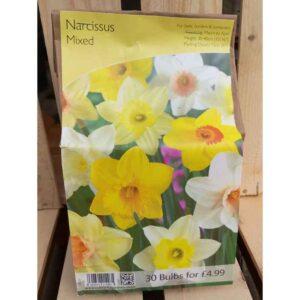 Narcissus Mixed (30 Bulbs)