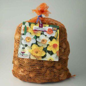 Narcissus 'Mixed' Daffodils (5kg Bag)