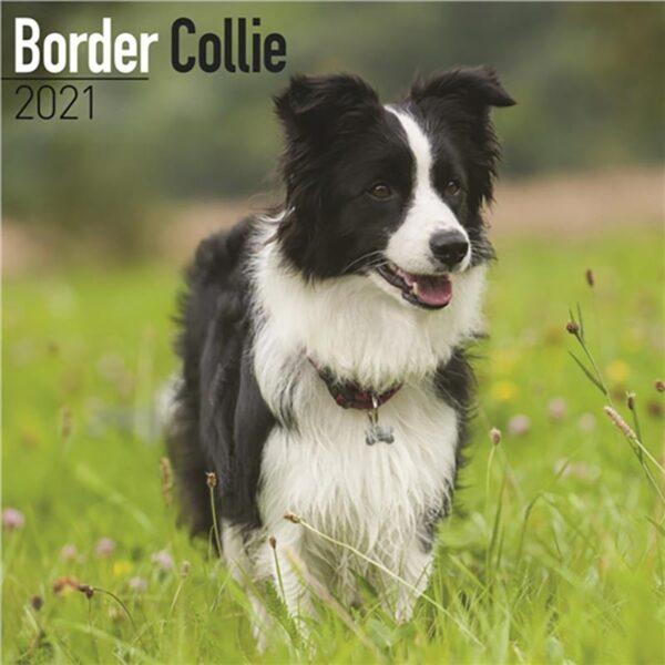 Otter House-Border Collie Wall Calendar 2021