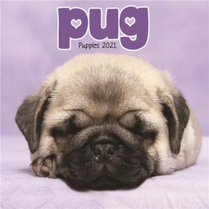 Otter House-Pug Puppies Mini Wall Calendar 2021