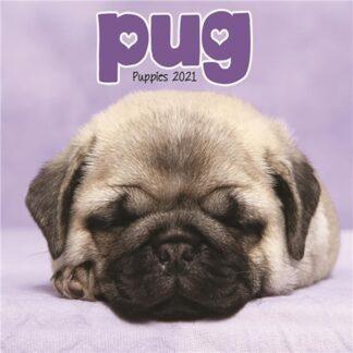Otter House-Pug Puppies Mini Wall Calendar 2021