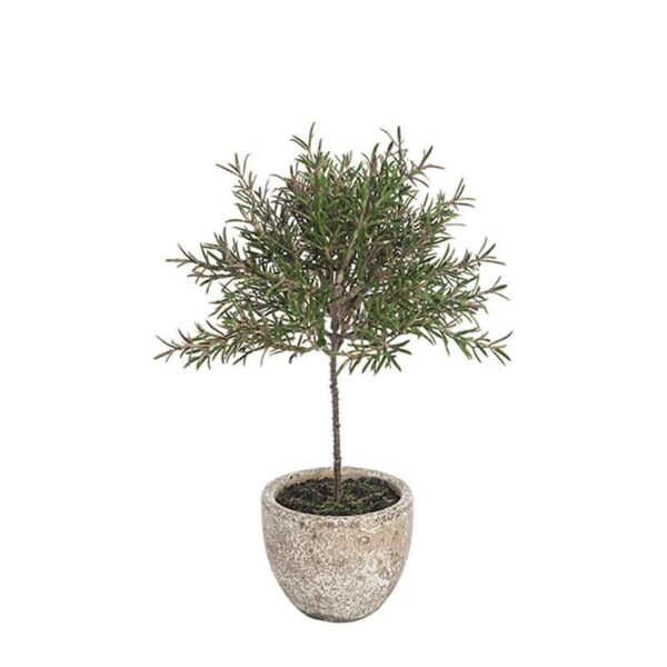 Rosemary Topiary Potted 29cm