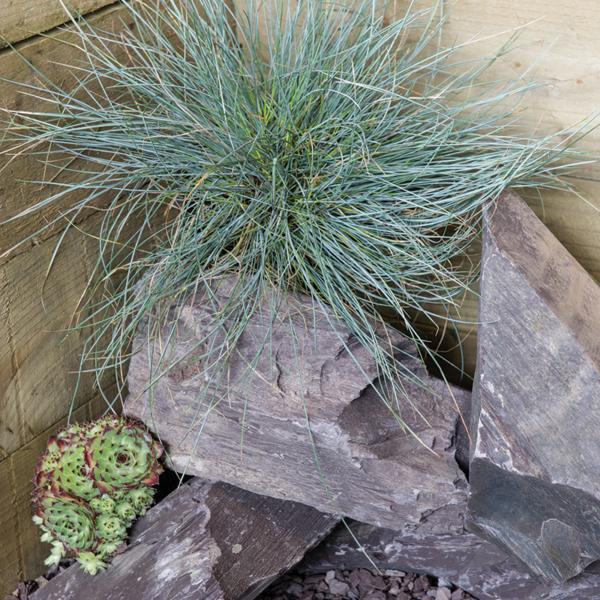 Kelkay Rockery Stone in Plum Slate with plants