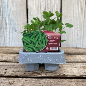Pea Plants Sugar Snap 12 Pack