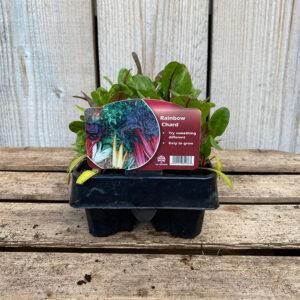 Rainbow Chard Plant 12 Pack