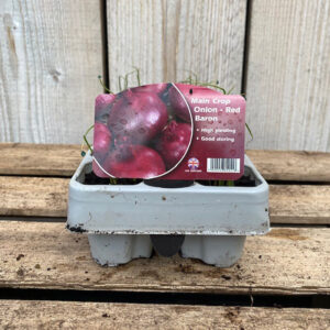 Red Onion Plant Red Baron 12 Pack