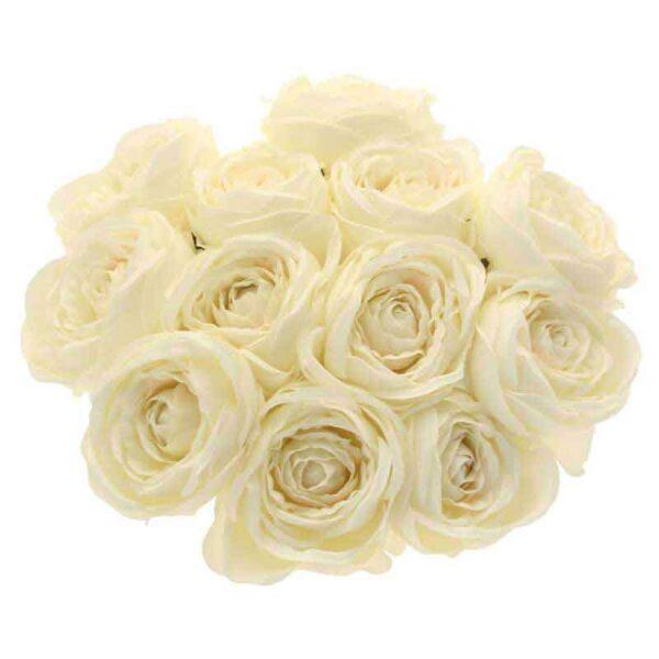 Cream Tea Rose