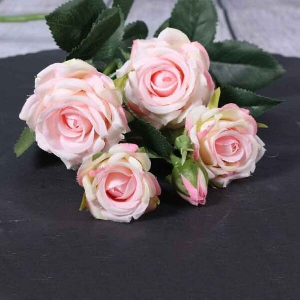 Cream Pink Camelot Garden Rose Spray Stem (70cm)