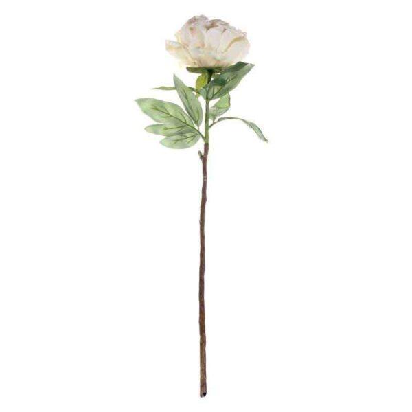Single Cream Peony Stem (71cm)