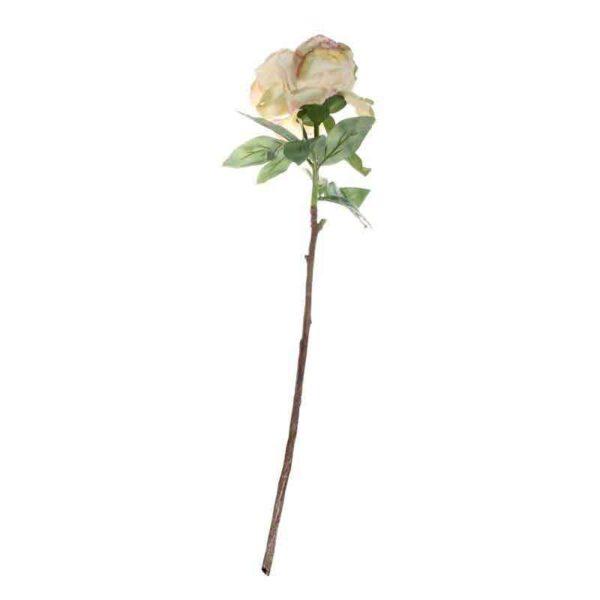 Single Cream Blush Peony Stem (71cm)