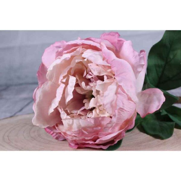 Single Antique Pink Peony Stem (71cm)