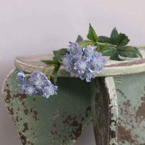Blue Astrantia Stem -14 Flowers (50cm)