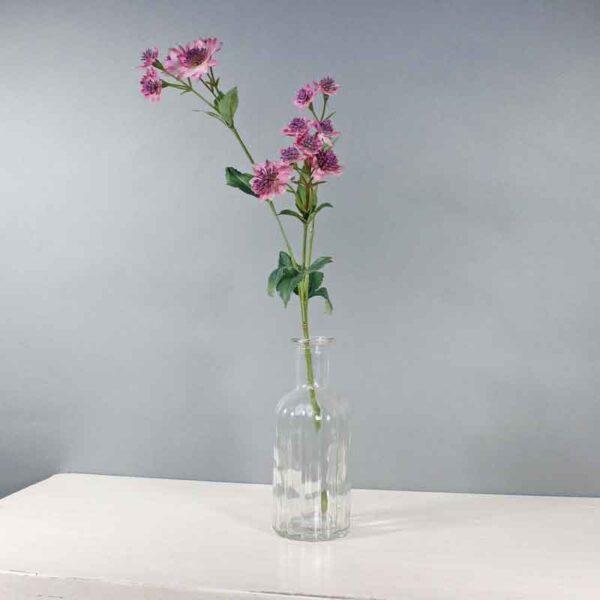 Mauve Astrantia Stem -14 Flowers (50cm)