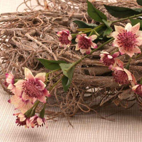 Pink Astrantia Stem -14 Flowers (50cm)