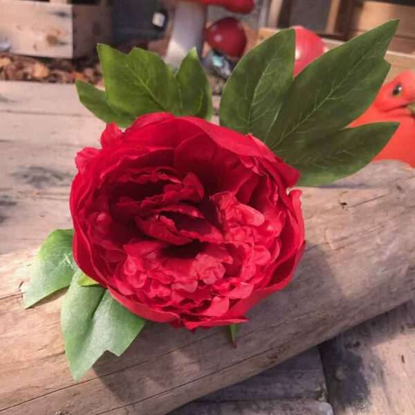 red peony stem