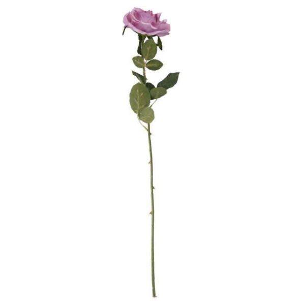 Arundel open rose lavender