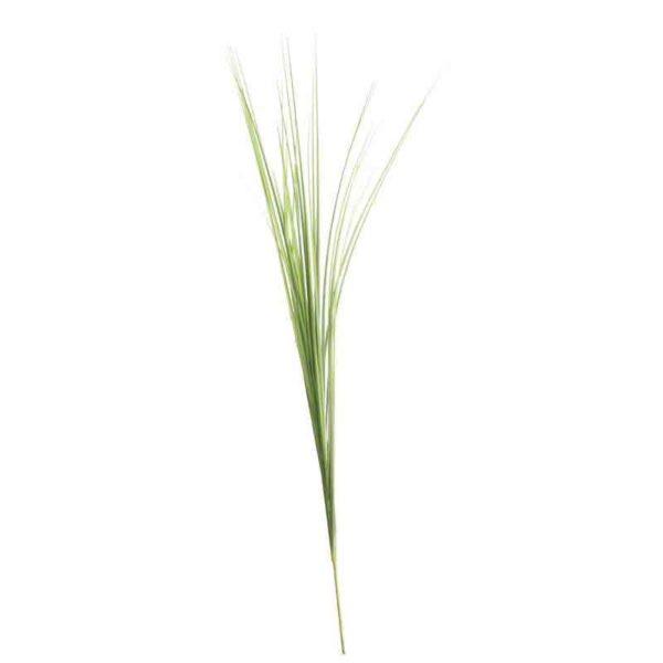 Bear Grass Stem (72cm)