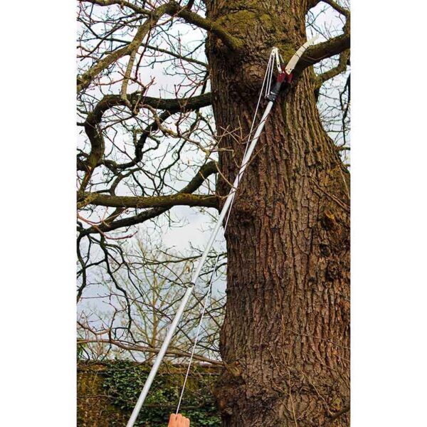 Showing the Kent & Stowe Telescopic Tree Lopper in use