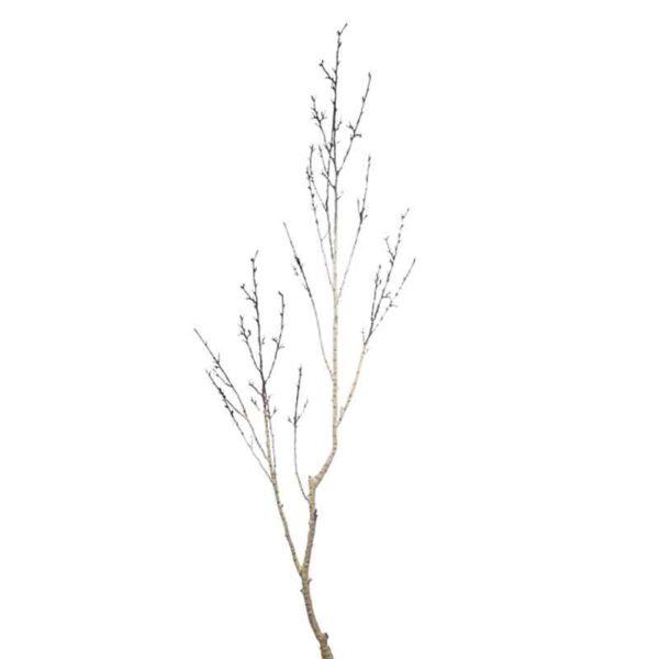floralsilk silver birch branch 135cm