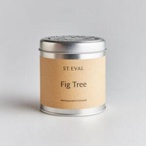 St Eval Fig Tree 800px